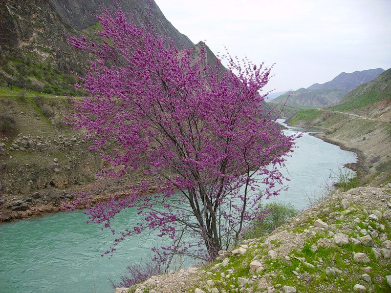 Vakhsh River. Tajikistan photos